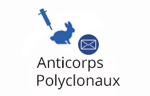 Anticorps Polyclonaux