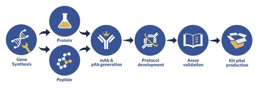 Custom assay development process