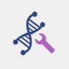 Codon optimization – Gene synthesis