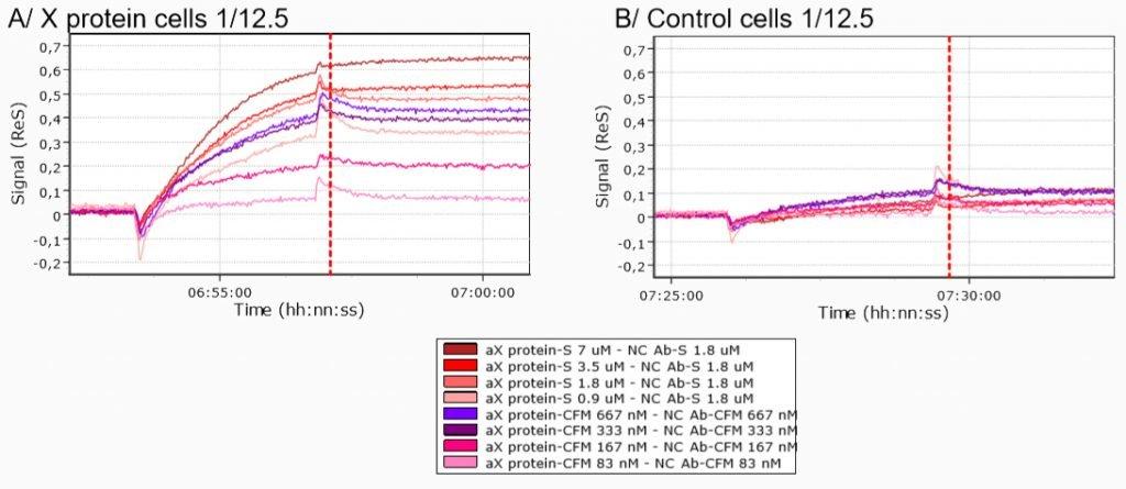 SPRi antibody cell interaction measurement example