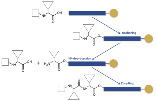 Solid-phase peptide synthesis steps