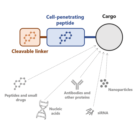 Cell-penentrating peptides