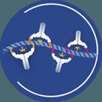 Polyclonal antibody production services